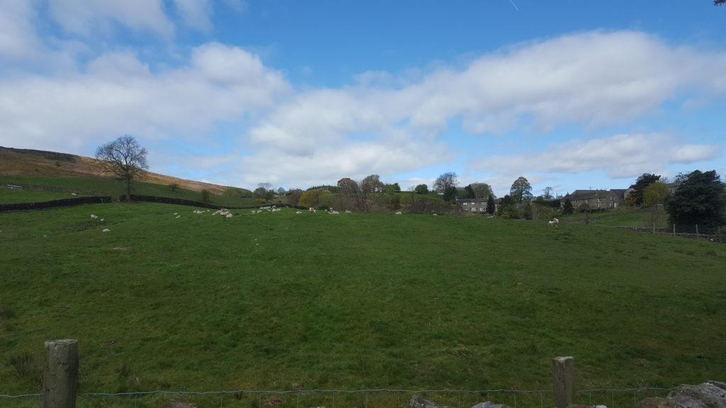 organic lawn mowers 3